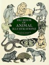 Big Book of Animal Illustrations - Maggie Kate