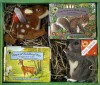 Smithsonian's Backyard: Fawn at Woodland Way/Gray Squirrel at Pacific Avenue (Smithsonian Soundprints Mini Book and Plush Series) - Kathleen Weidner Zoehfeld, Victoria Sherrow, Geri Harrington, Michele Chopin Roosevelt
