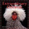 NOT A BOOK: Extraordinary Chickens 2009 Wall Calendar - NOT A BOOK