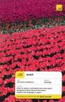 Teach Yourself Dutch Complete Course (Book Only) - Gerdi Quist, Dennis Strik