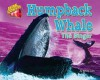 Humpback Whale: The Singer - Natalie Lunis