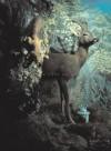 Conrad Atkinson: Landescapes [With DVD] - Conrad Atkinson, Richard Cork