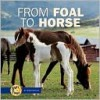 From Foal to Horse - Robin Nelson