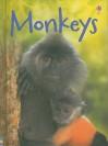 Monkeys - Lucy Bowman