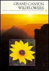 Grand Canyon Wildflowers - John Richardson