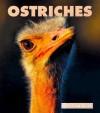Ostriches - Thane Maynard