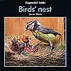 Bird's Nest - Barrie Watts