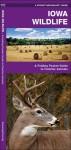 Iowa Wildlife: A Folding Pocket Guide to Familiar Species - James Kavanagh, Raymond Leung