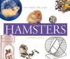 Hamsters - Kathryn Stevens