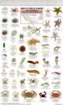 Mac's Field Guide to California Coastal Invertebrates (Mac's Guides (Flash Cards)) - Craig MacGowan