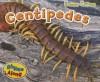 Centipedes - Rebecca Rissman