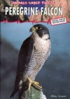 Peregrine Falcon - Mike Unwin, Marianne Taylor