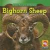 Bighorn Sheep - JoAnn Early Macken