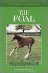 Understanding the Foal - Christine M. Schweizer, Christine M. Schweizer, Jacqueline Duke