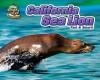 California Sea Lion: Fast & Smart! - Natalie Lunis