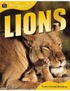 Lions (Animal Lives) - Sally Morgan