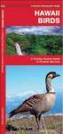 Hawaii Birds: A Folding Pocket Guide to Familiar Species (Pocket Naturalist Guide Series) - James Kavanagh, Raymond Leung
