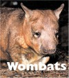 Wombats - Mary Berendes