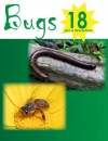 Bugs! 18 Pictures of Common Insects - Mark Smith