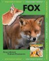 Red Fox - Jinny Johnson