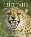 Cheetahs - Tracey Rich, Andy Rouse