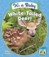 It's a Baby White-Tailed Deer! - Kelly Doudna