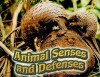 Animal Senses and Defenses - Susan Ring
