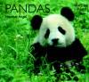 Pandas - Heather Angel
