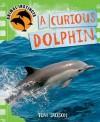 Curious Dolphin - Tom Jackson