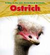 Ostrich - Louise Spilsbury