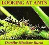 Looking At Ants - Dorothy Hinshaw Patent
