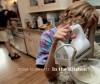 In the Kitchen - Dona Schwartz, Marion Winik, Dona Schwartz, Alison Nordstrom