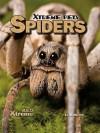 Spiders - Sue L. Hamilton