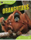 Orangutans - Sally Morgan
