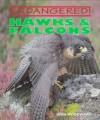 Hawks & Falcons - John Woodward