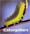 Caterpillars - Patrick Merrick