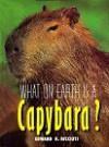 What on Earth Is a Capybara? (What on Earth) - Edward R. Ricciuti, Bruce S. Glassman