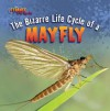 The Bizarre Life Cycle of a Mayfly - Greg Roza