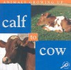 Calf to Cow - Jason Cooper, Lynn M. Stone