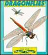 Dragonflies - Heather Amery