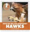 How Do We Live Together? Hawks - Katie Marsico