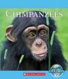 Chimpanzees - Katie Marsico