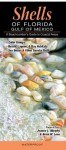 Shells of Florida - Gulf of Mexico: A Beachcomber's Guide to Common and Notable Species - Murphy, Jeanne L., Lane, Brian W.