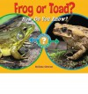 Frog or Toad?: How Do You Know? - Melissa Stewart