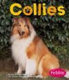Collies - Jody Sullivan Rake