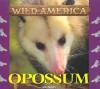 Opossum (Wild America) - Tanya Lee Stone