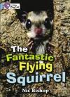 The Fantastic Flying Squirrel: Band 04/Blue (Collins Big Cat) - Nic Bishop
