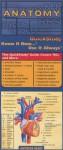 Anatomy (Quickstudy: Academic) - Inc. BarCharts
