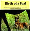 Birth of a Foal - Hans-Heinrich Isenbart