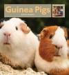 Guinea Pigs - Valerie Bodden